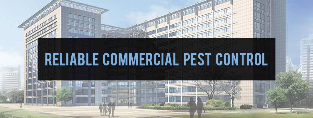 Reiable Commercial Pest Control