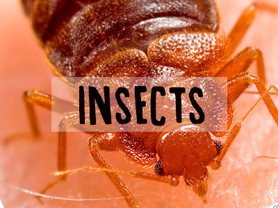 Insects | L'ex-terminateurJM | Extermination West Island