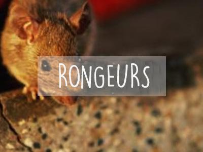 Extermination Montreal | Rats Souris| Rongeurs