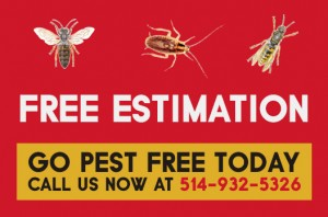 Extermination Mice Montreal | Extermination Rodents Montreal