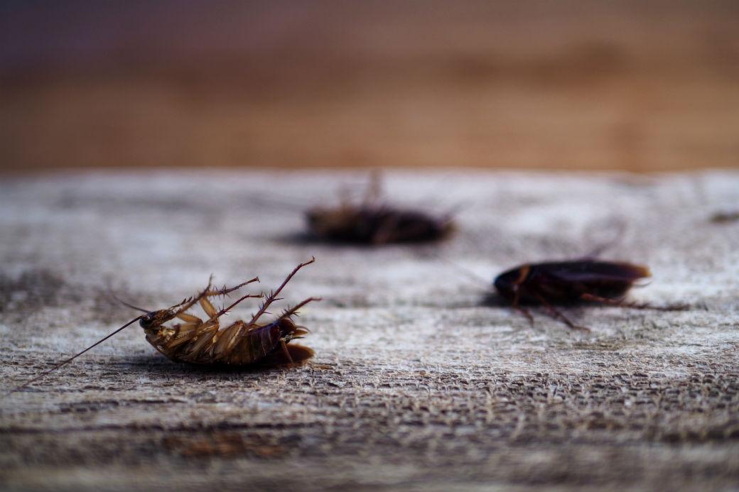 Extermination Cockroach | Lex-TerminateurJM